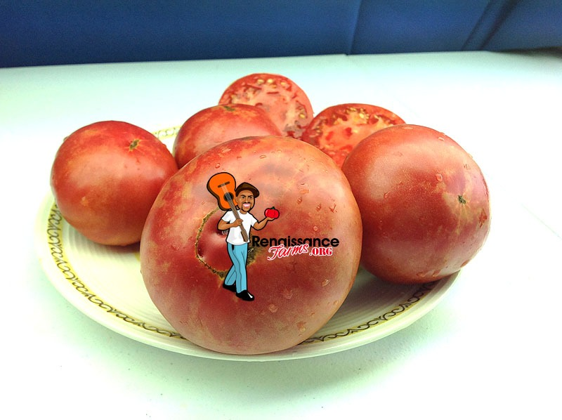 Brimmer Tomato