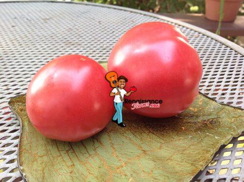 Demidov Dwarf Tomato