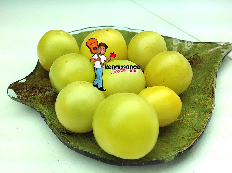 Dwarf-Barossa-Moon-Tomato