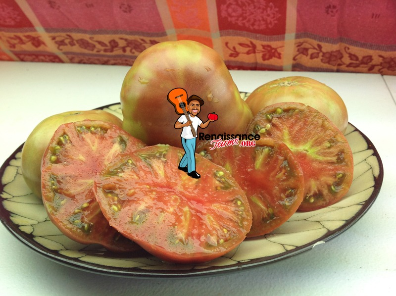 Dwarf-Black-Angus-Tomato