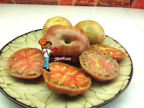 Dwarf Black Angus Tomato