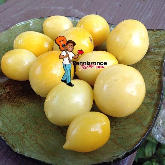 Dwarf-Manduran-Moon-Tomato