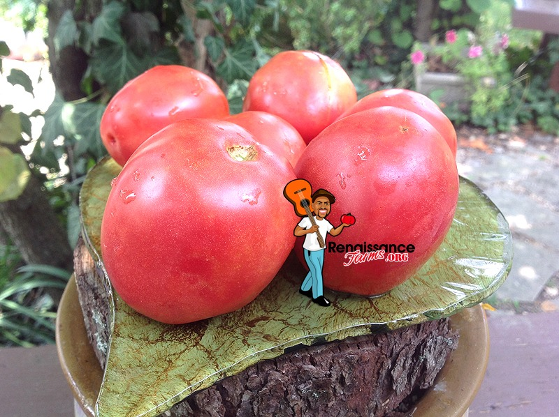 Dwarf-Melanie's-Ballet-Tomato