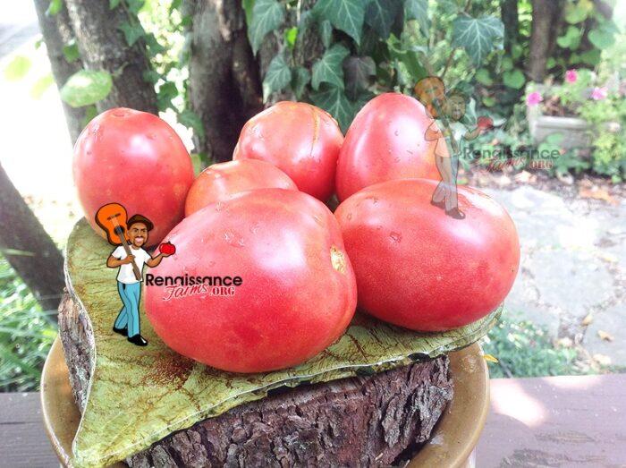 Dwarf Melanie's Ballet Tomato