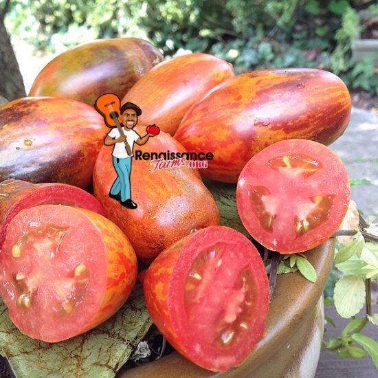 Dwarf Shadow Boxing Type 4 Tomato