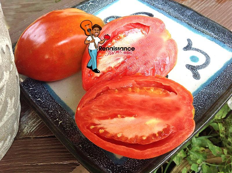 Dwarf Sibirskaya Troika Tomato