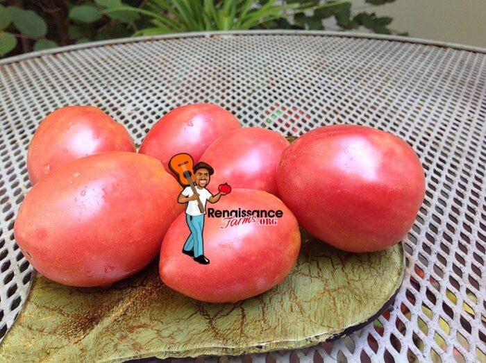 Dwarf-Solokah-Tomato
