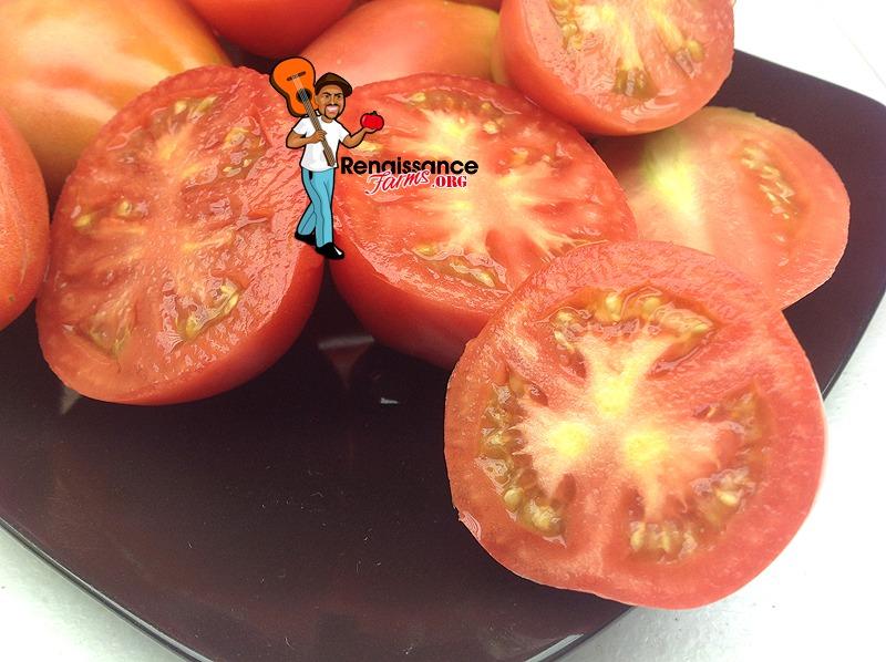Dwarf Solokah Tomatoes