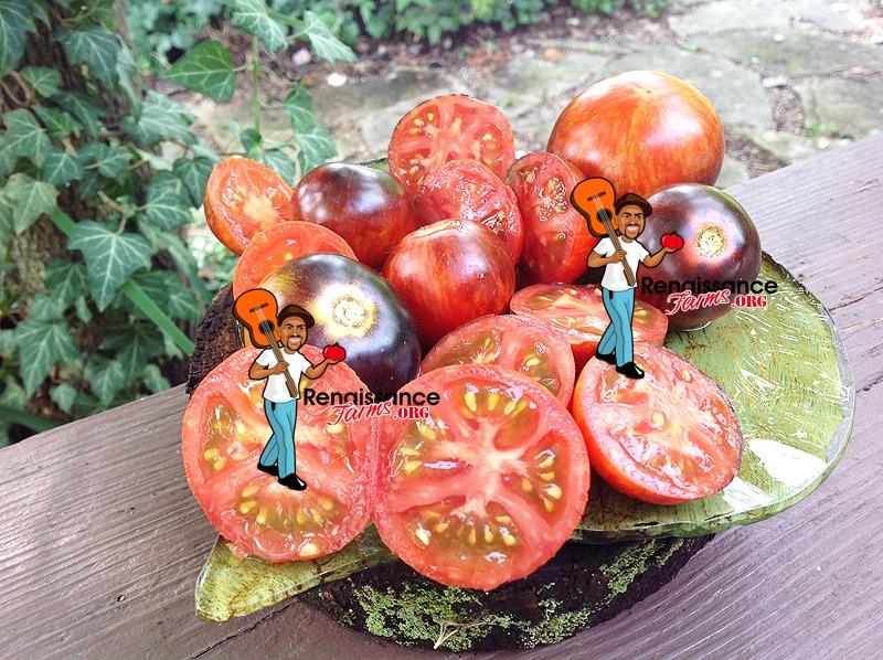 Dwarf Striped Antho Tomato