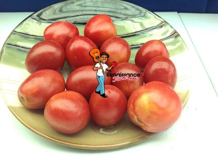 Dwarf Tomato Bendigo Blush