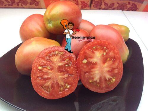 Dwarf Tomato Solokah