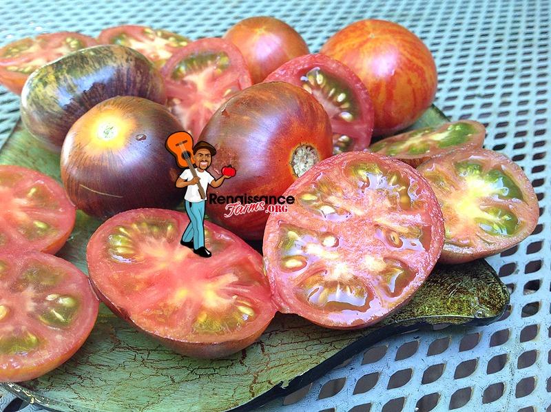 Dwarf-Striped-Antho-Tomato