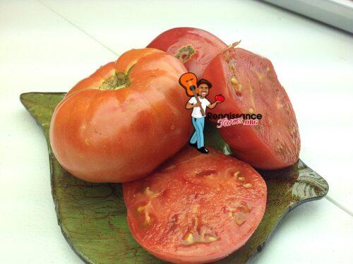 Dwarf_Sweet_Adelaide_Tomato