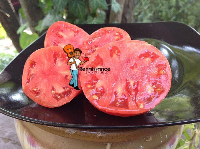 Egyptian Pink Heirloom Tomato
