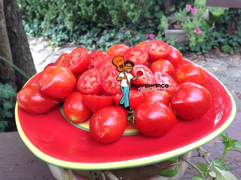 Geranium Kiss Dwarf Tomatoes