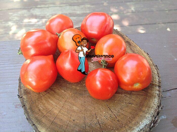 Geranium Kiss Tomato 2018