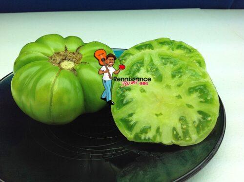 Jackass Green Dwarf Tomato