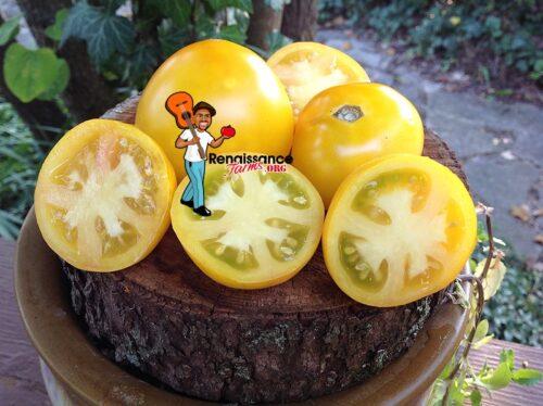 Kangaroo Paw Yellow Tomato Dwarf
