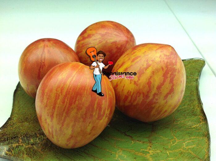 Kozula 133 Tomato Image