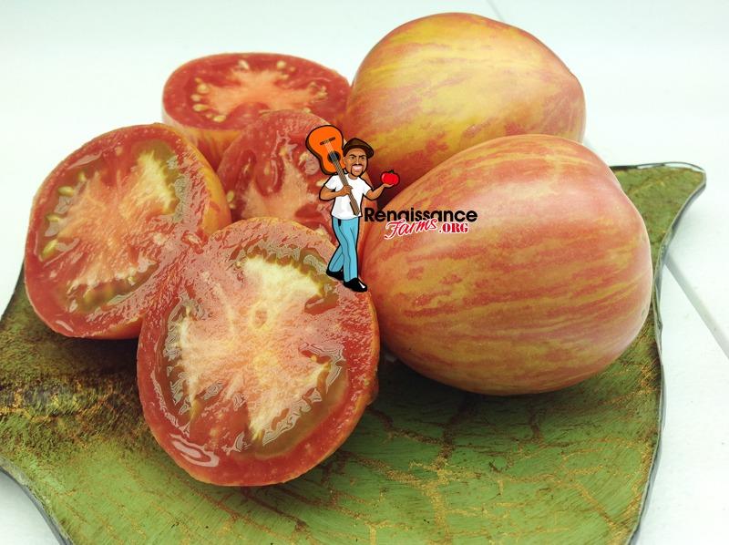 Kozula-133-Tomato-Picture