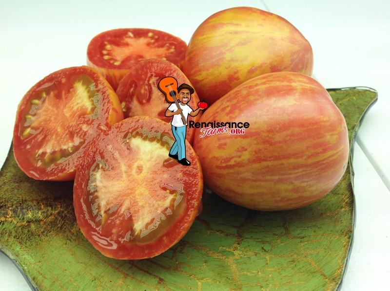 Kozula 133 Tomato Pictures