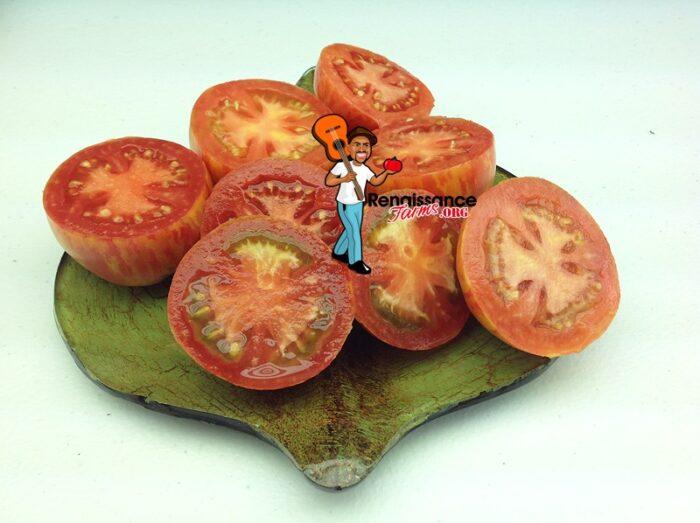 Kozula-133-Tomato Plants