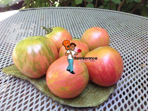Kozula 133 Tomatoes