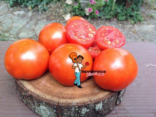 Lucky Leprechaun Dwarf Tomato Seeds