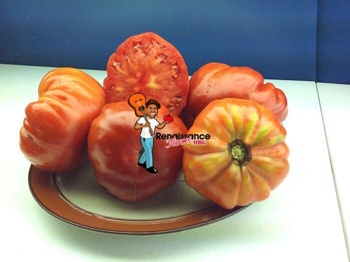 Marmande Garnier Rouge Tomato