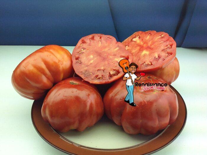 Marmande Garnier Rouge Tomatoes