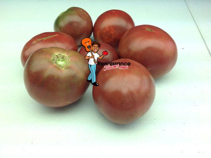 Mary's Cherry Dwarf Tomato