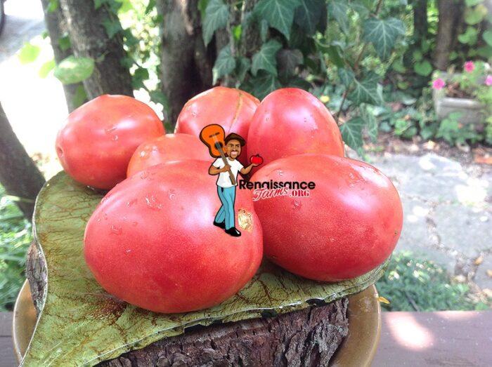 Melanie's Ballet Dwarf Tomato