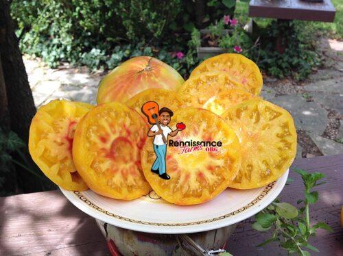 Mortgage Lifter Bi-Color Tomato