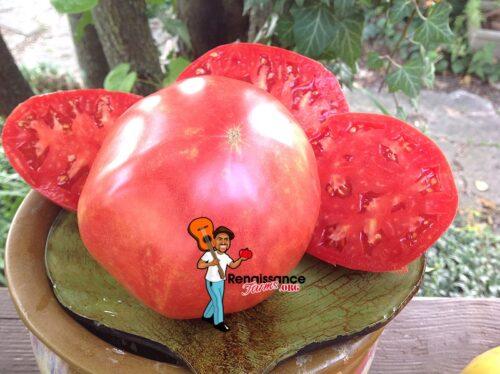 Mrs Maxwell's Big Italian Tomato