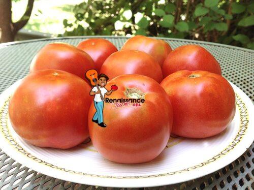 Mule Team Tomato