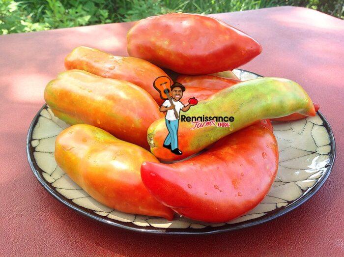 Polish Linguisa Heirloom Tomato