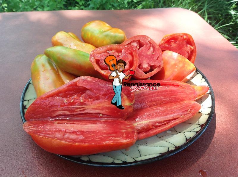Polish Linguisa Sauce Tomato