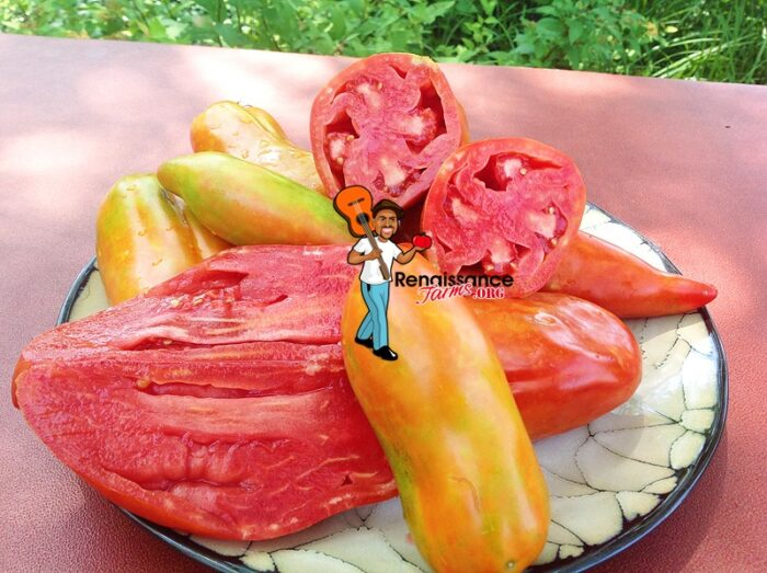 Polish Linguisa Tomato