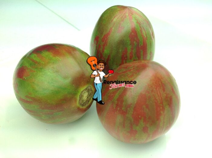 Sailor's-Luck-Tomato