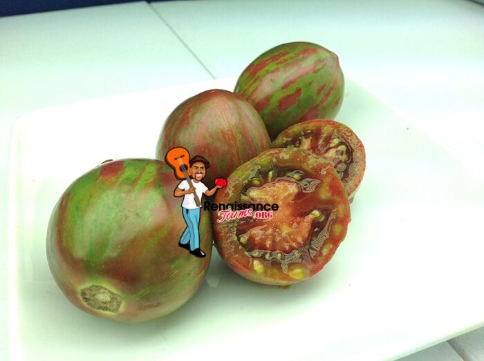 Sailor's Luck Tomato Seeds