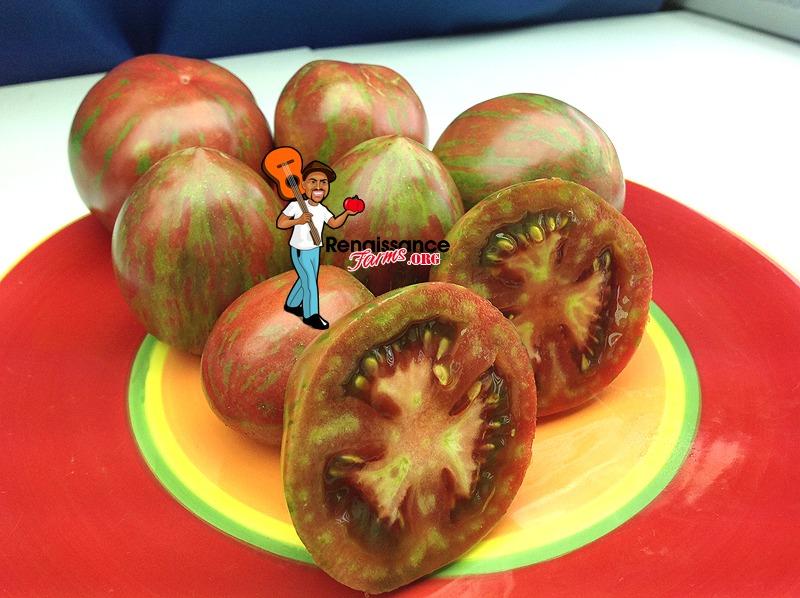 Sailors Luck Tomato