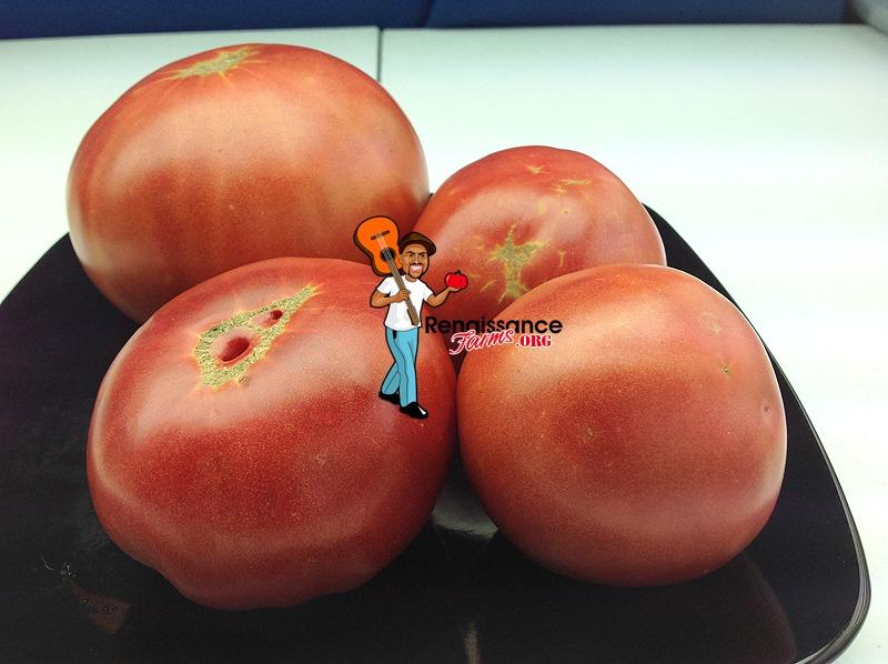 Sekai Ichi Tomato