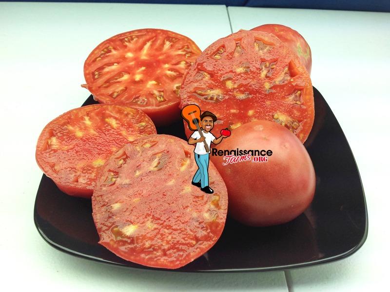 Sekai_Ichi_Chinese_Tomato