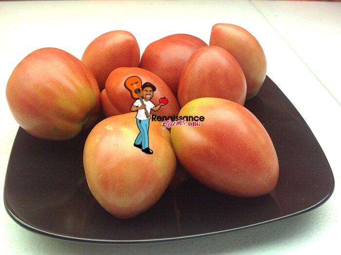 Shloka-Dwarf-Tomato