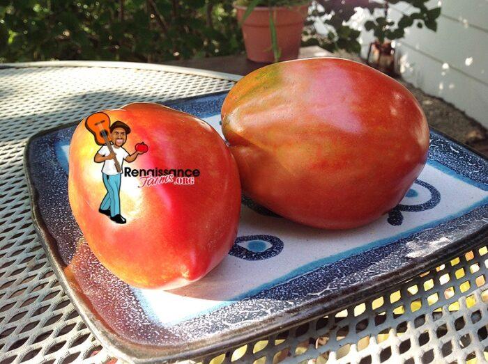 Sibirskaya Troika Dwarf Tomato 2018