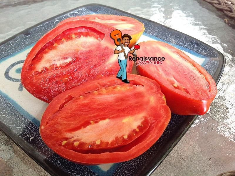 Sibirskaya Troika Dwarf Tomato