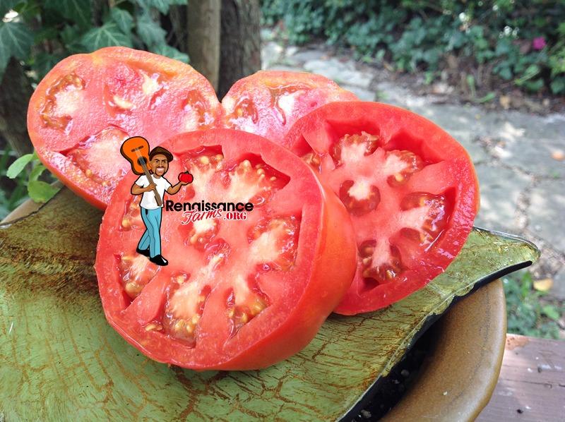 Sneaky Sauce Dwarf Tomato