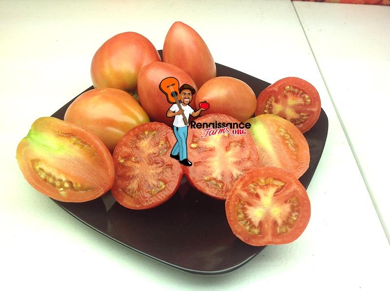 Solokah Dwarf Tomato 2018