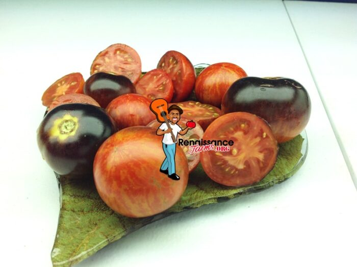 Striped Antho Dwarf Tomato
