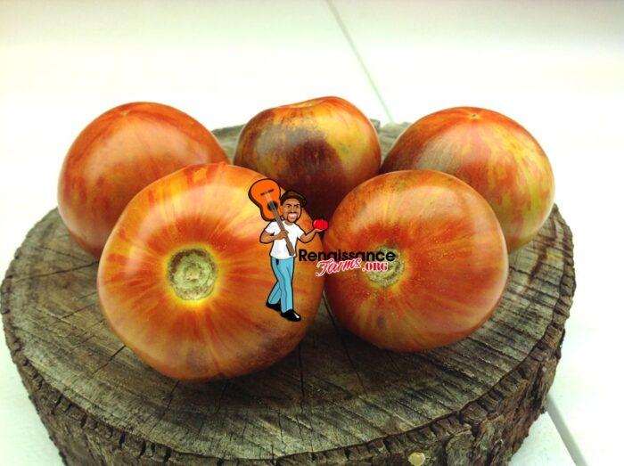 Striped Antho Tomato Dwarf